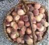 Персик кустовой